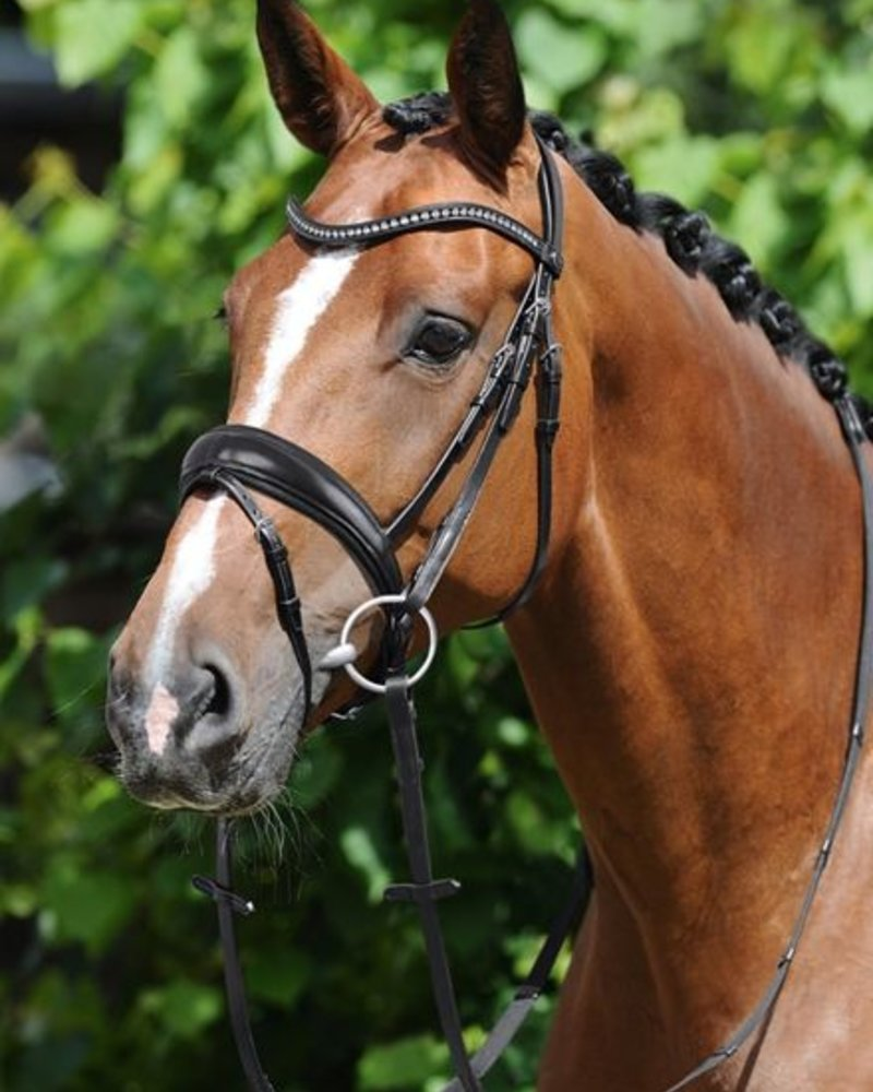 Passier Atlas Snaffle Bridle Black