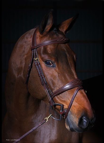 Dy'on Anatomic Flash Noseband Bridle Brown