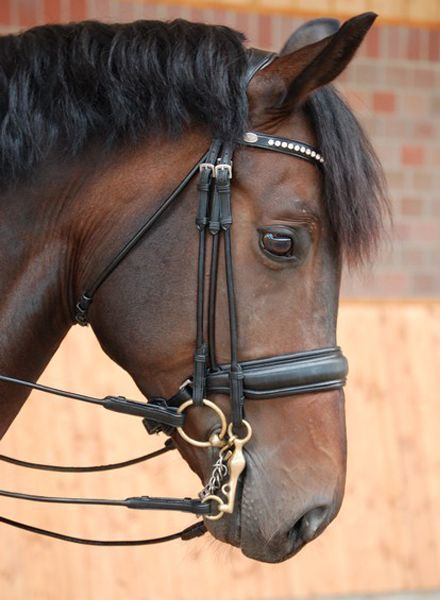 Dy'on Dressage Collection Large Crank Noseband Double Bridle Mat Black/Black