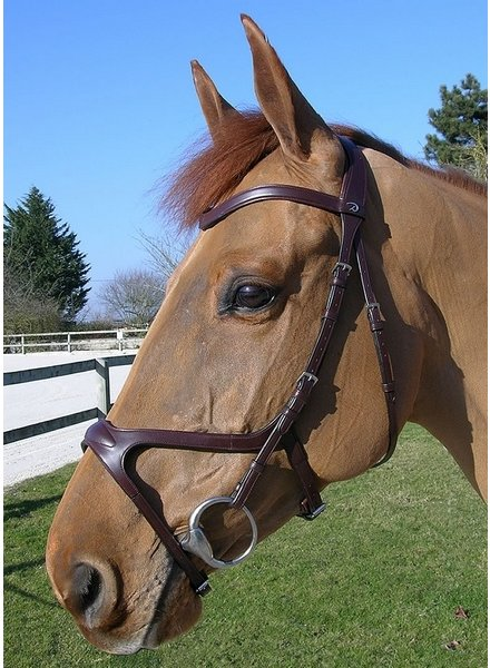 Dy'on X-Fit Bridle Brown