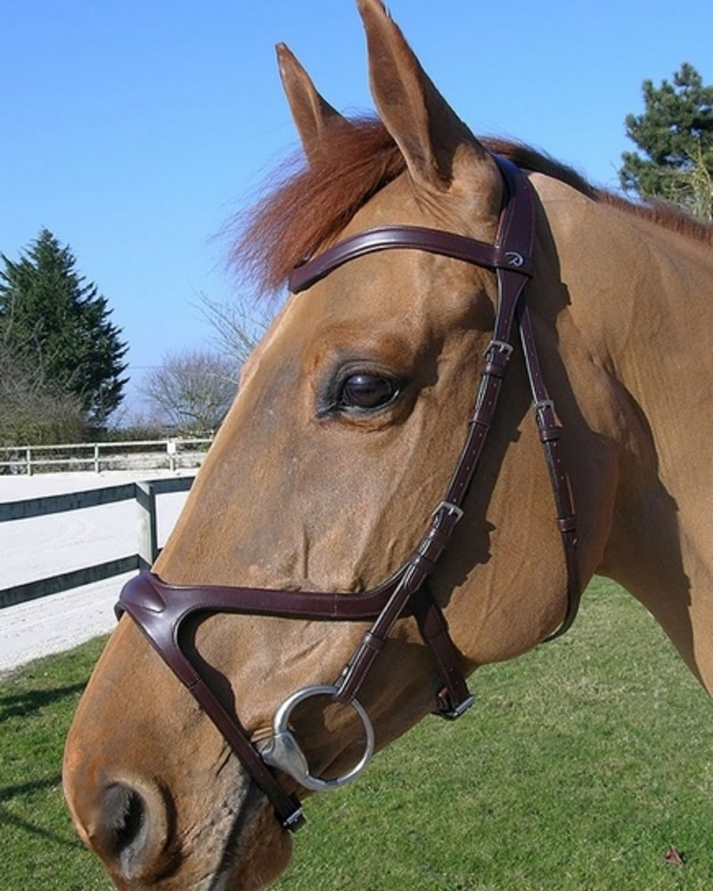 Dy'on Dy'on X-Fit Bridle Brown