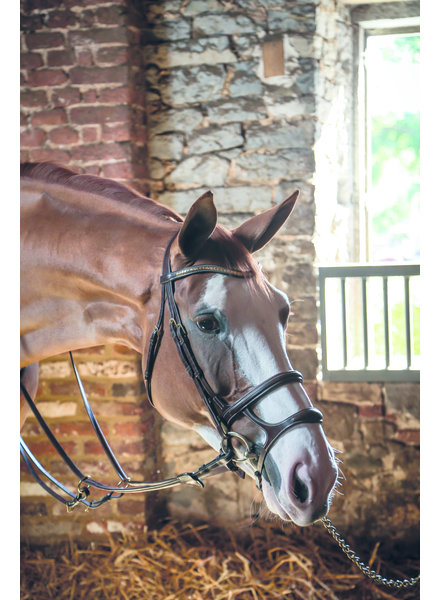 Dy'on Double Noseband Brown