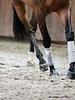 Incrediwear Equine Incrediwear Therapeutic Exercise Bandages