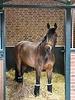 Incrediwear Equine Incrediwear Circulation Staande reiswraps