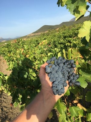 From Rugged Ancient Hills: Res Fortes Wines