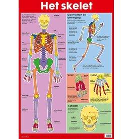 Edutrix Het Skelet - Educatieve Poster