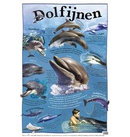 Edutrix Dolfijnen - Educatieve Poster