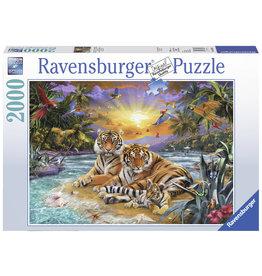 Ravensburger Ravensburger puzzel 166244  Tijgers at Sunset 2000 stukjes
