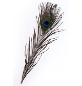 Veren Pauw 25-30 cm (10 stuks)