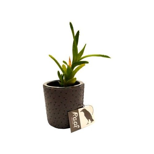 Raaf Flowerpot Madrid Black - Copy