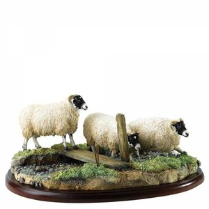 Border Fine Arts Black Face Ewes