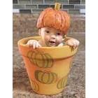 Anne Geddes Pumpkin Baby