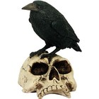 Studio Collection Raven on Skull