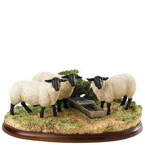Border Fine Arts Suffolk Sheep
