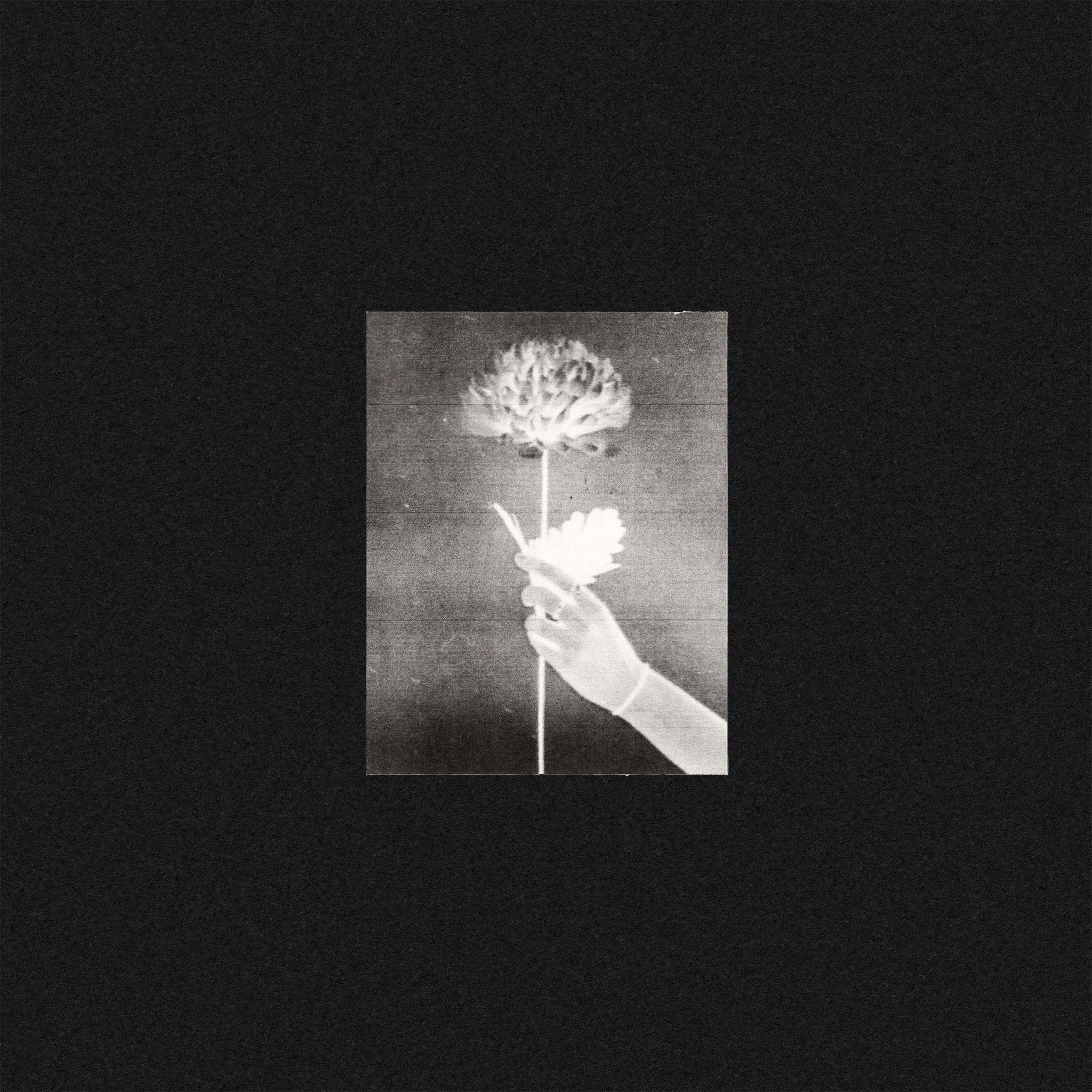 Tough Love Records White Flowers - Day By Day (Coloured Vinyl)