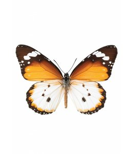 Hagedornhagen muursticker Butterfly 950