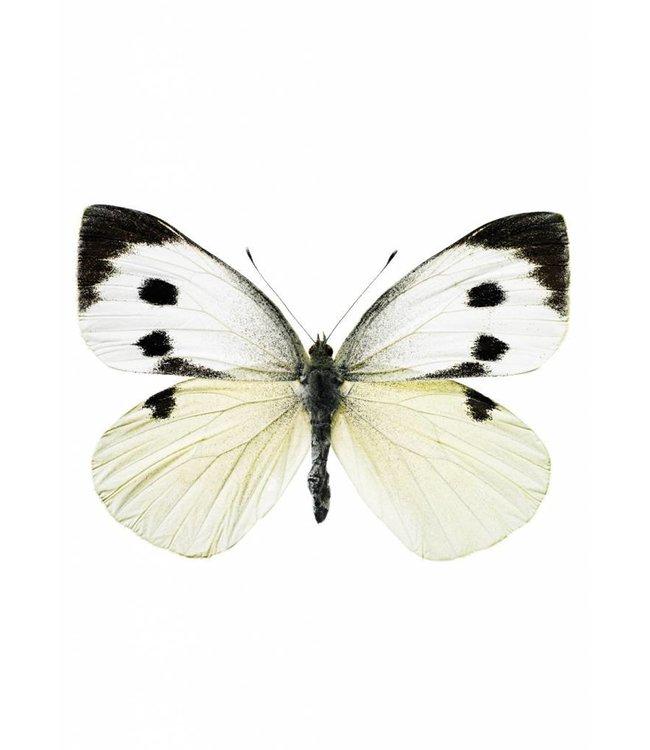 Wall sticker Butterfly 956, 17 x 12 cm