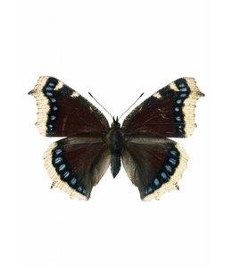 Wandtattoo Butterfly 957