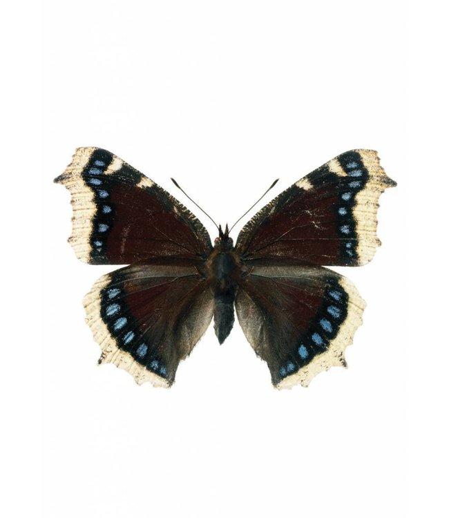 Hagedornhagen muursticker Butterfly 957, 17 x 11 cm