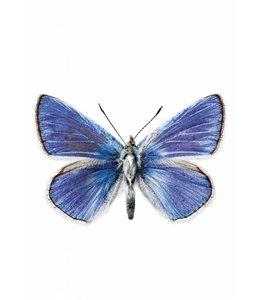 Wandtattoo Butterfly 959