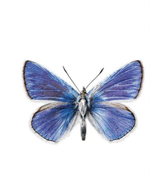 Wall sticker Butterfly 959, 17 x 11 cm