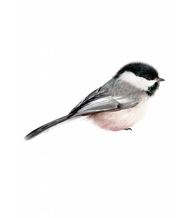 Wall sticker Chickadee, 13 x 6 cm