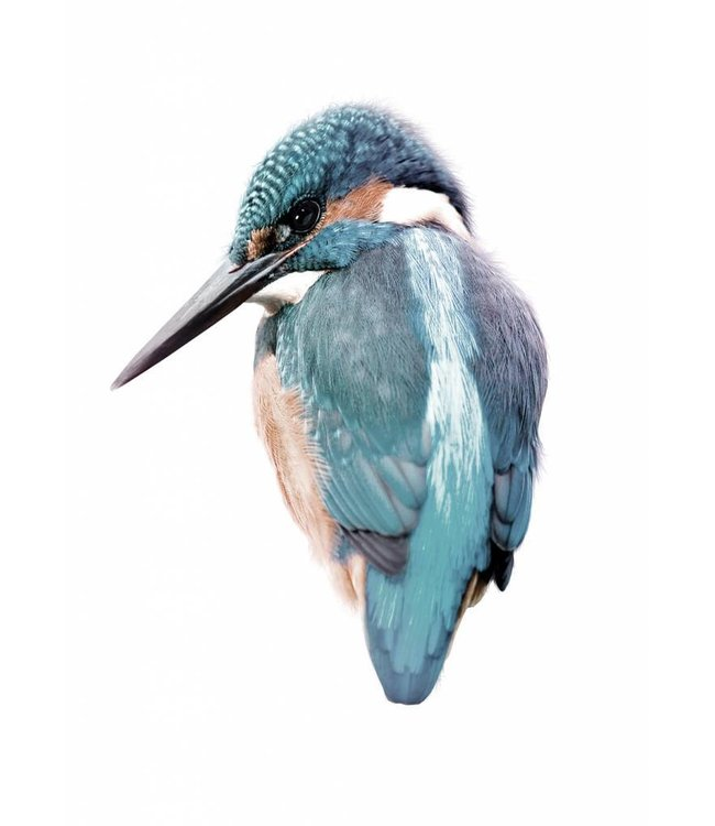 Muursticker Kingfisher, 15 x 11 cm