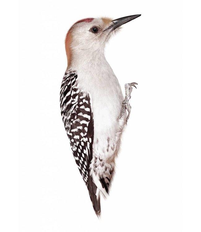 Muursticker Woodpecker, 8 x 20 cm