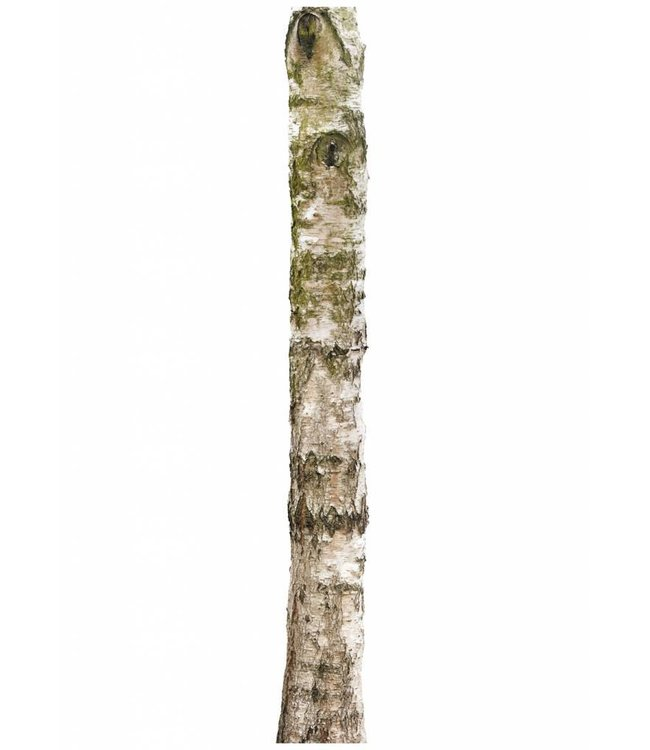 Muursticker Home Tree 4, 28 x 260 cm
