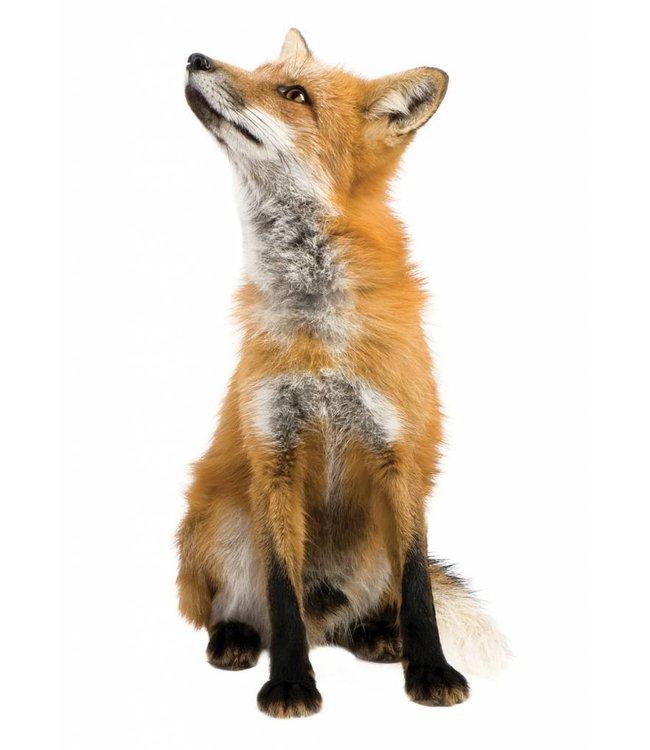 Wandtattoo Fox, 23 x 46 cm