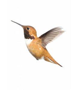 Wandtattoo Hummingbird