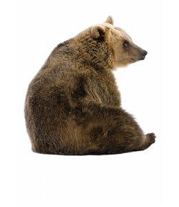 Wandtattoo Bear