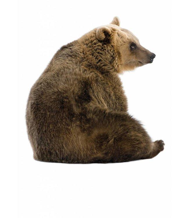 Wall sticker Bear, 40 x 42 cm