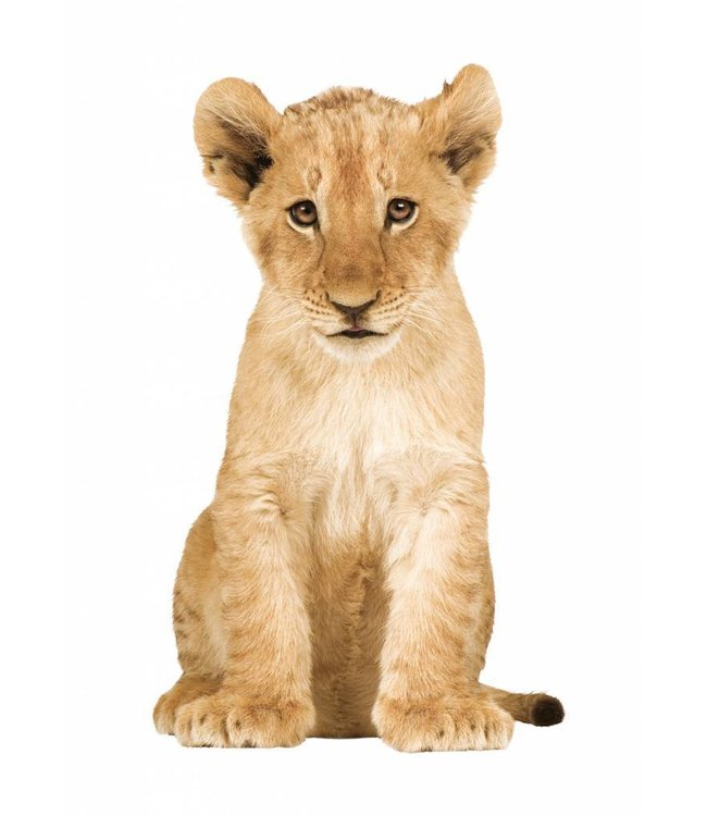 Wall sticker Lion Cub, 28 x 48 cm
