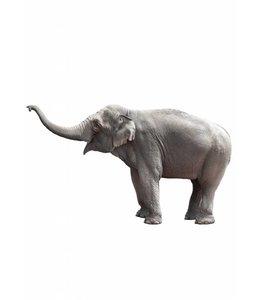 Wandtattoo Elephant