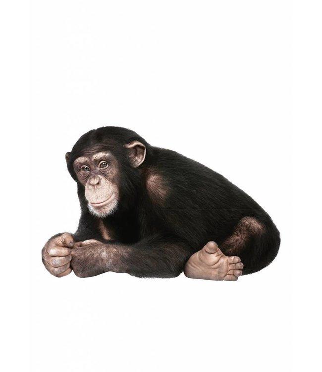 Wandtattoo Chimpanzee, 44 x 29 cm