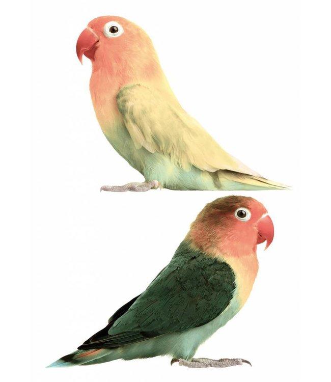 Muurstickers Lovebirds, 23 x 17 cm
