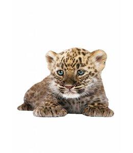 Wandtattoo Leopard Cub