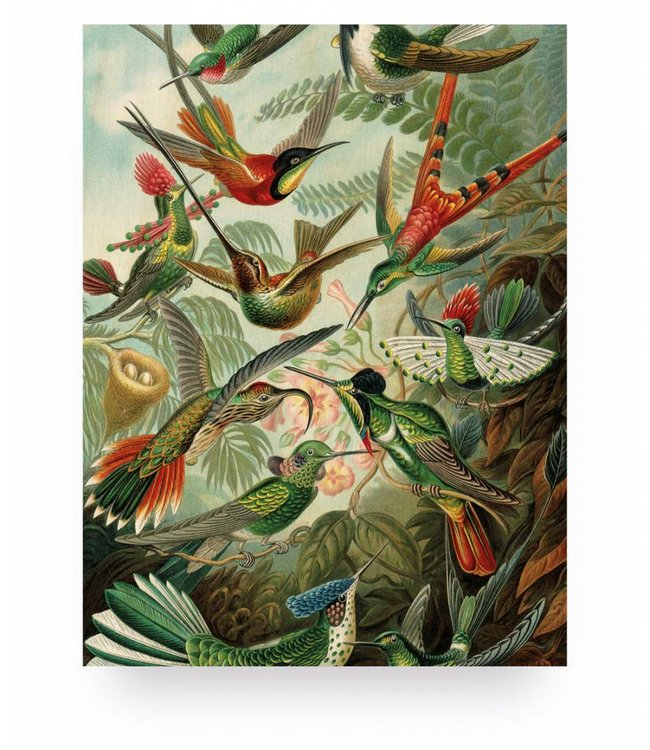 Prints auf Holz, Exotic Birds, S, 45 x 60 cm