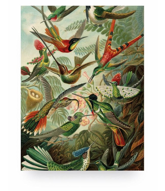 Prints auf Holz, Exotic Birds, M, 60 x 80 cm