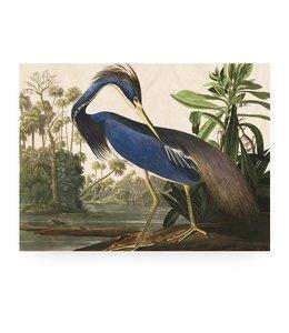 Print op hout Louisiana Heron, L