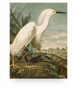 Prints auf Holz, Snowy Heron, M
