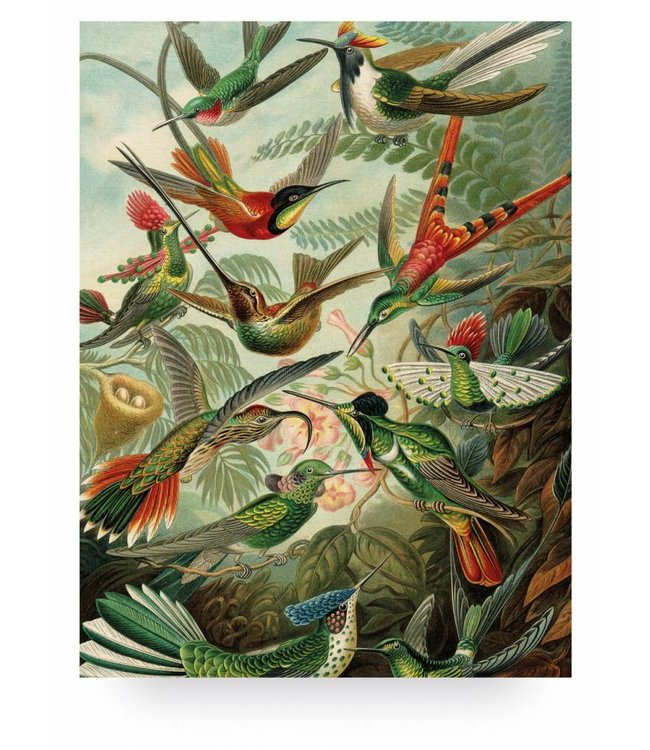 Prints auf Holz, Exotic Birds, L, 75 x 100 cm