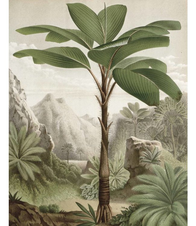 Behangpaneel Banana Tree, 142.5 x 180 cm