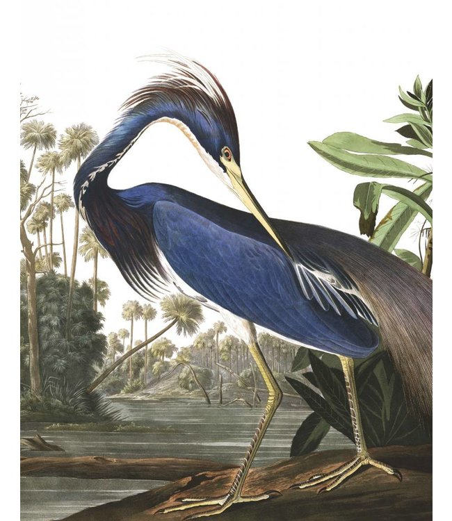 Behangpaneel Louisiana Heron, 142.5 x 180 cm