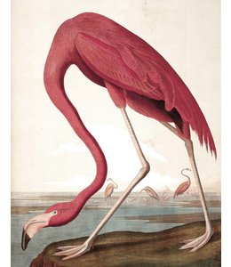 Behangpaneel Flamingo