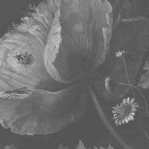 Black and white photo wallpaper with huge graphic flowers kek photo wallpaper black white flowers mightylinksfo