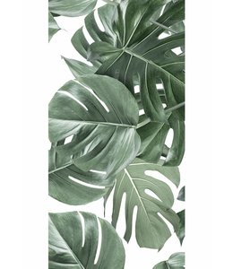 Behang Monstera