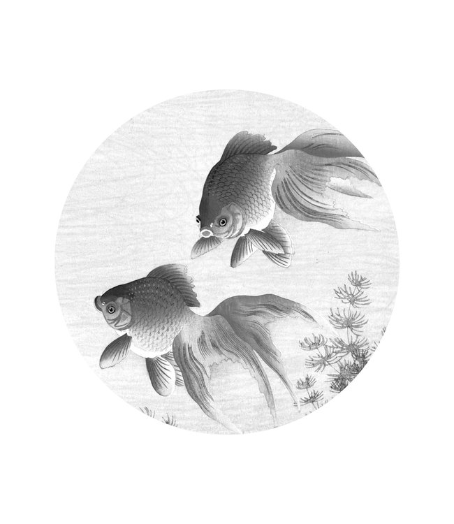 Tapetenpaneel rund Goldfish, ø 142.5 cm