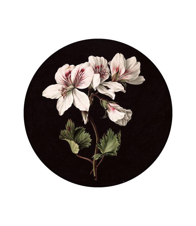 Behangcirkel White Flowers, ø 142.5 cm